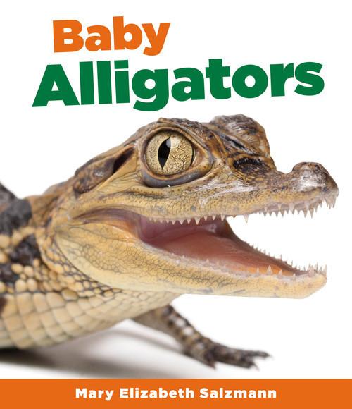 Cover: Baby Alligators