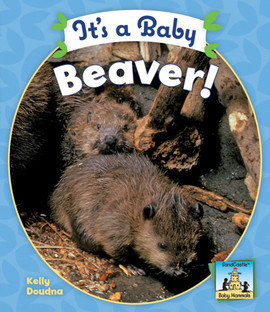 Cover: It's a Baby Beaver