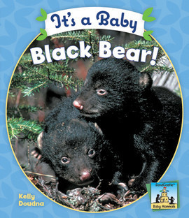 Cover: It's a Baby Black Bear