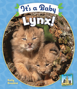 Cover: It's a Baby Lynx