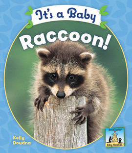 Cover: It's a Baby Raccoon