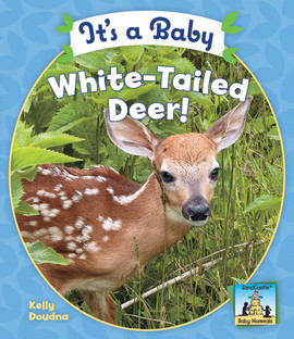 Cover: It's a Baby White-Tailed Deer