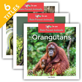 Cover: Rain Forest Animals