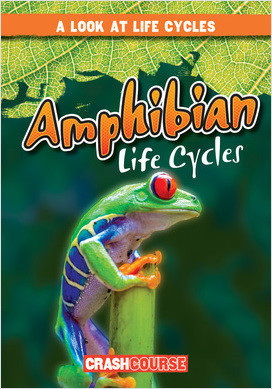 Cover: A Look at Life Cycles