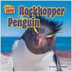 Cover: Rockhopper Penguin