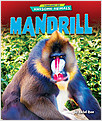 Cover: Mandrill