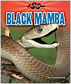Cover: Black Mamba