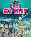Cover: Banded Sea Krait