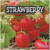 Cover: Strawberry