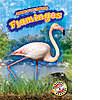 Cover: Flamingos