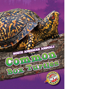 Cover: Common Box Turtles