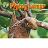 Cover: Flying Lemur