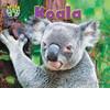 Cover: Koala