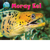 Cover: Moray Eel