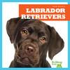 Cover: Labrador Retrievers