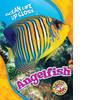 Cover: Angelfish