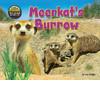 Cover: Meerkat's Burrow