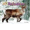 Cover: Reindeer