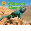 Cover: Collared Lizard