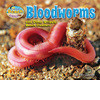Cover: Bloodworms and Other Wriggly Beach Dwellers