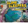 Cover: Slime Sleepers: Parrotfish