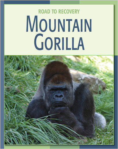 Cover: Mountain Gorilla