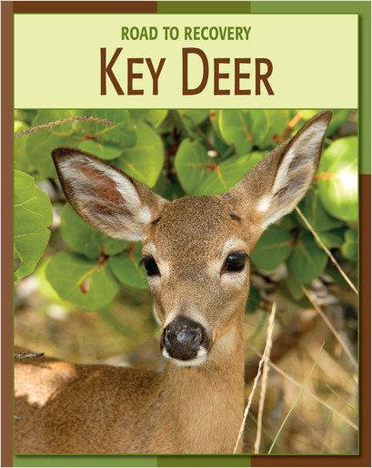 Cover: Key Deer