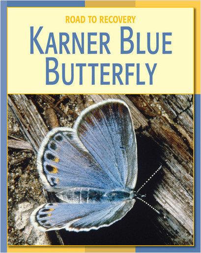 Cover: Karner Blue Butterfly