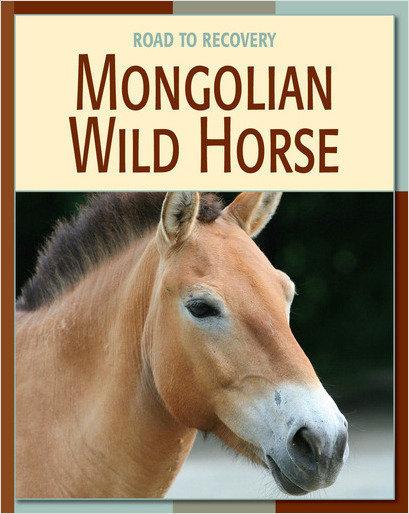 Cover: Mongolian Wild Horse
