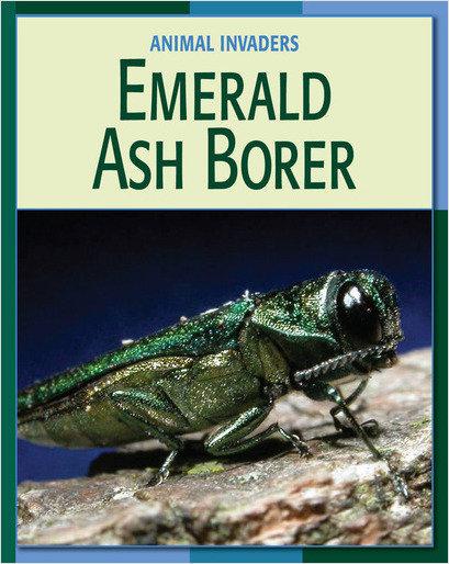 Cover: Emerald Ash Borer