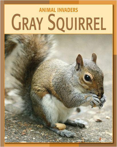 Cover: Gray Squirrel