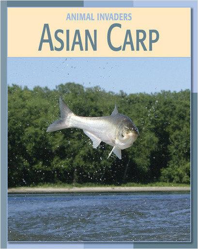 Cover: Asian Carp