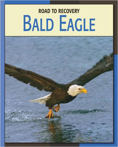 Cover: Bald Eagle