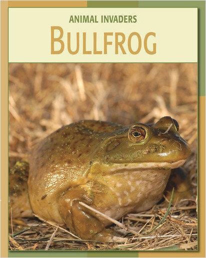 Cover: Bullfrog