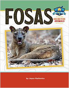 Cover: Fosas