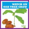 Cover: Watch an Oak Tree Grow