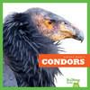 Cover: Condors