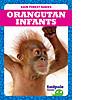 Cover: Orangutan Infants