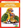 Cover: Las crías de los loros (Parrot Chicks)