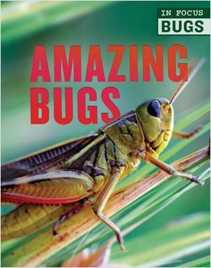 Cover: Amazing Bugs