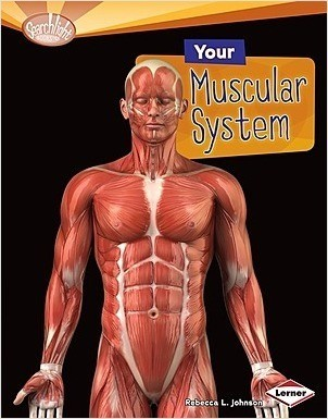 Cover: Your Muscular System