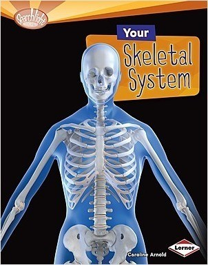 Cover: Your Skeletal System