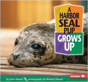 Cover: A Harbor Seal Pup Grows Up