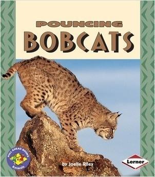Cover: Pouncing Bobcats