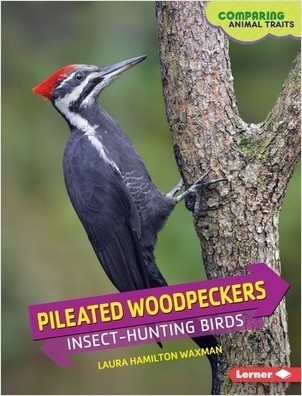 Cover: Pileated Woodpeckers: Insect-Hunting Birds