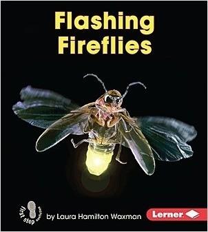 Cover: Flashing Fireflies