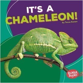 Cover: It's a Chameleon!