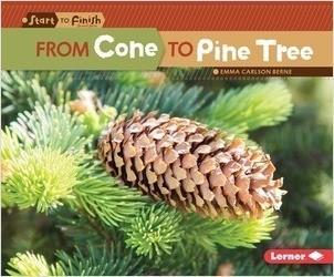 Cover: From Cone to Pine Tree