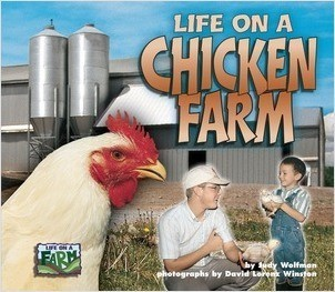 Cover: Life on a Chicken Farm