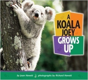 Cover: A Koala Joey Grows Up